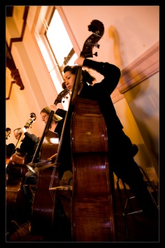 Double basses